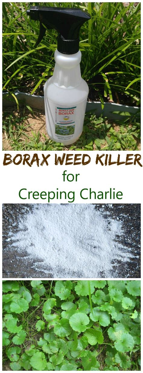 Killer For Garden by Borax Killer For Creeping The Gardening Cook