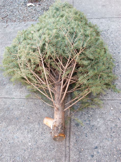 what to do with your tree what to do with your tree feed