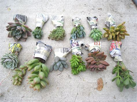 diy succulents recycled love letters diy succulent garden