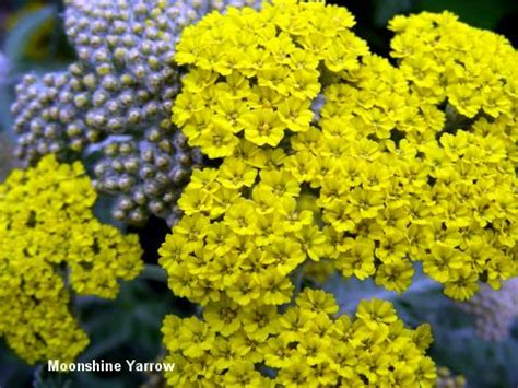 top 10 plants for drought conditions