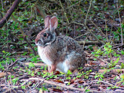 Winter Gardening In Texas - booming bunnies houston arboretum amp nature center