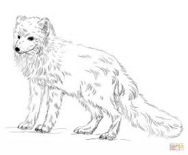 arctic fox color arctic fox coloring page free printable coloring pages