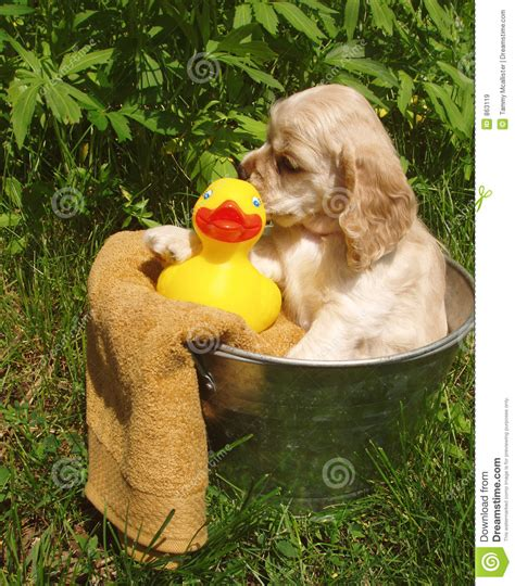 puppy bath time puppy bath time royalty free stock images image 863119