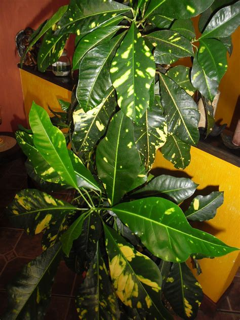 identify   house plants gardening forums