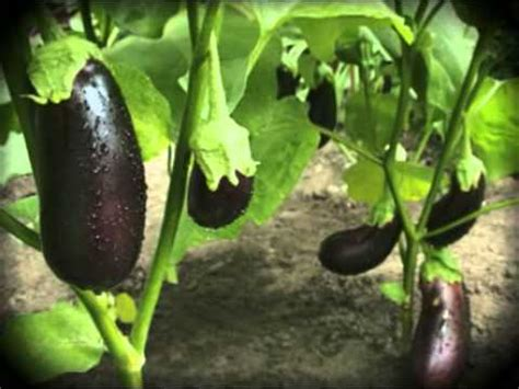 how to plant vegetables in a garden how to plant a vegetable garden tips on growing home