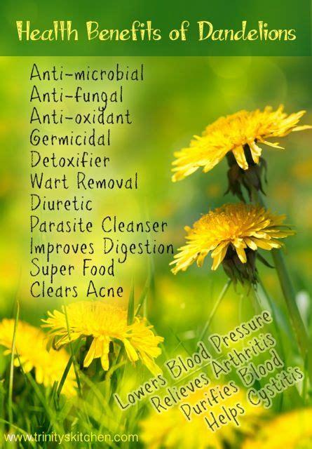 Dandelion Root Tea Detox Thc by Best 25 Dandelion Tea Detox Ideas On