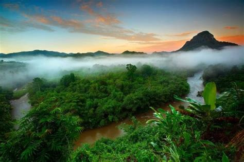 amazon indonesia tropical rainforest biomes d