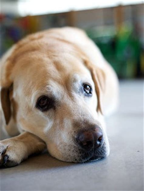 can dogs get depressed why do dogs get depressed
