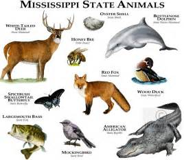 mississippi state colors state animals of mississippi line and color