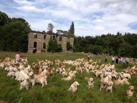 golden retriever club of scotland do you cultural events around the world the just landed