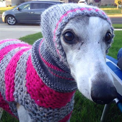 knitting for greyhounds items similar to sweater coat jumper
