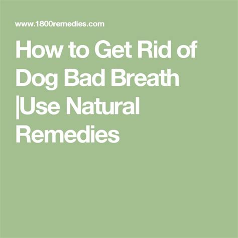 puppy bad breath home remedy 25 best ideas about breath remedies on bad breath pet