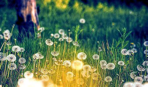 wallpaper tumblr spring hello spring tumblr amazing wallpapers