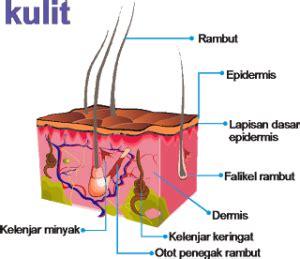 desain lu minyak apa itu kelenjar sebaceous dan 7 manfaatnya bagi kulit