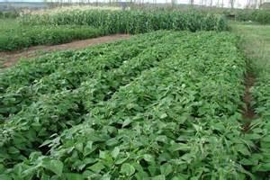 Veggie Patch Planted At National Field Days Site 22 Feb Vegetable Garden Australia