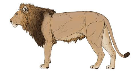 lions colors how to draw big cats lions tigers cheetahs and much more
