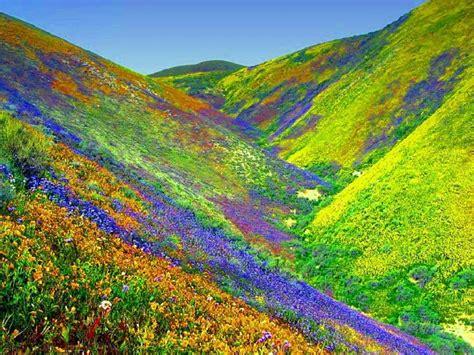 la valle dei fiori di qua e di la valle dei fiori valley of flowers