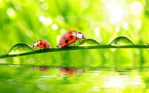 twig water drops water ladybug rays desktop wallpaper   wallpaperscom