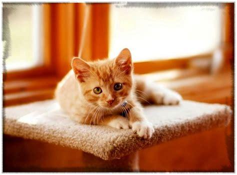 imagenes para fondo de pantalla gatos fondos de pantalla de gatitos bebes tiernos archivos