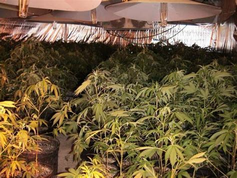 buying a grow op house how can you tell if home was used as grow op winnipeg free press homes