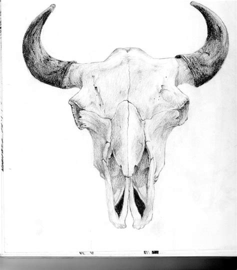 animal tattoo pen bull skull drawings bull skull by j44314 traditional art