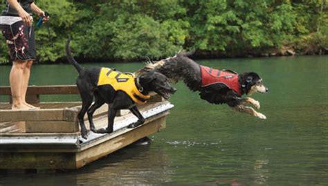 zwemvest hond verplicht zweemvest reddingsvest hondenforum
