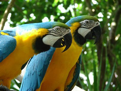 macaw parrots www imgkid com the image kid has it