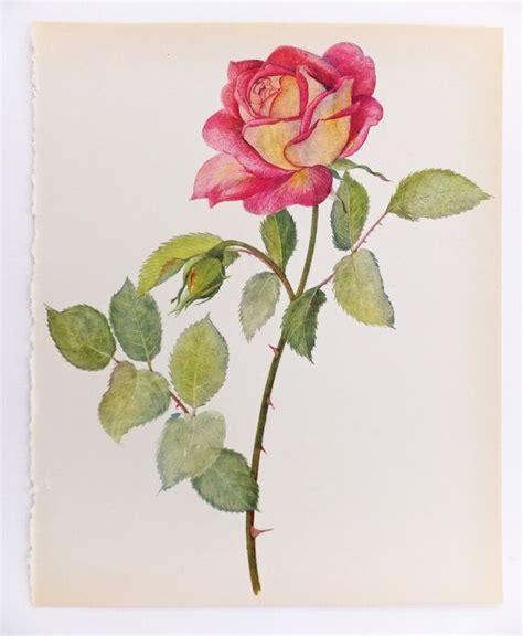 antique rose botanical garden wall art print by vintage botanical print contrast rose art wall hanging