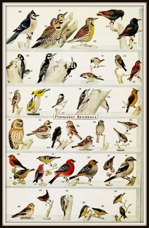 best 25 bird identification ideas on backyard