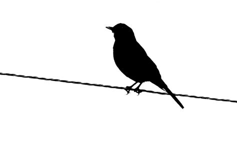bird silhouette in black and white wallpaper black and