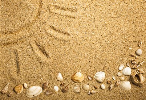 picture sand shells