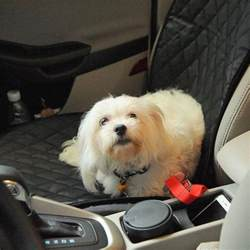 Non Slip Car Seat Covers For Dogs Waterproof Non Slip Car Seat Cover For Dogs Kaboodleworld