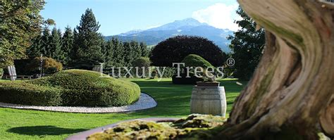 Gartengestaltung Japanischer Garten by Gartenplanung 187 Luxurytrees 174 Schweiz