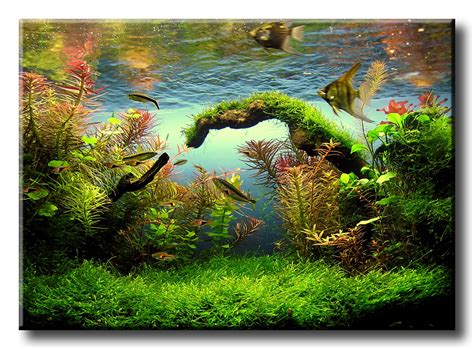 aquascaping tropical fish tank 1000 images about aquarium landscapes on pinterest mini