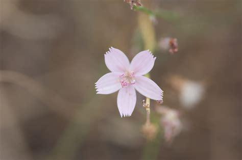 Light Flower 45 Wallpapers Hd Desktop Wallpapers Lights Flower
