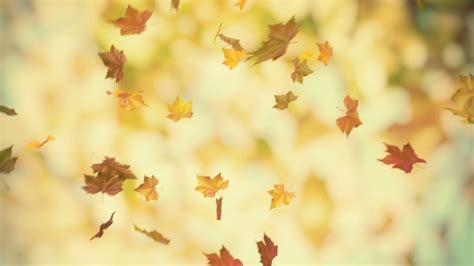 Clear Background Check Meaning Autumn Leaf Falling Www Pixshark Images Galleries With A Bite