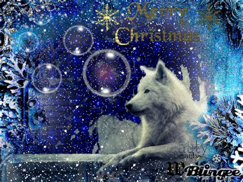 christmas wolf picture 127187364 blingee com