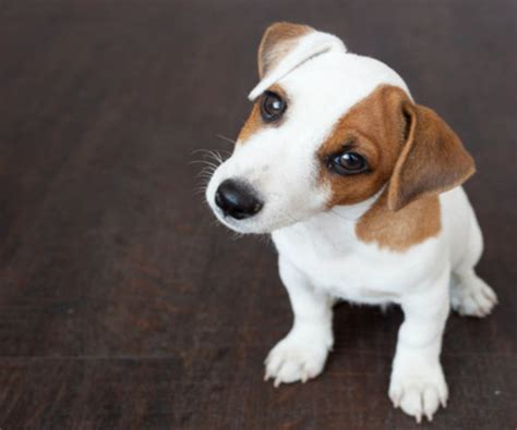 what foods can kill dogs sweetener in common foods can kill or poison dogs fda newsmax