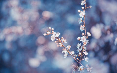 flower wallpaper tumblr hd flower tumblr wallpaper 1440x900 42447