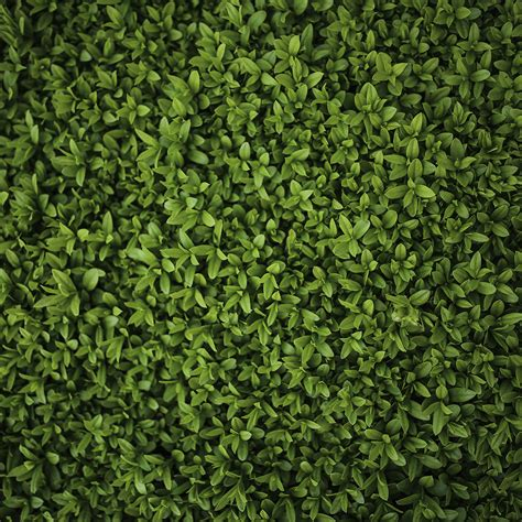 green wallpaper with leaf pattern vk70 nature green leaf grass garden flower pattern papers co
