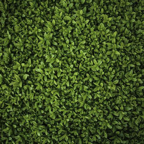 wallpaper green leaf pattern vk70 nature green leaf grass garden flower pattern papers co
