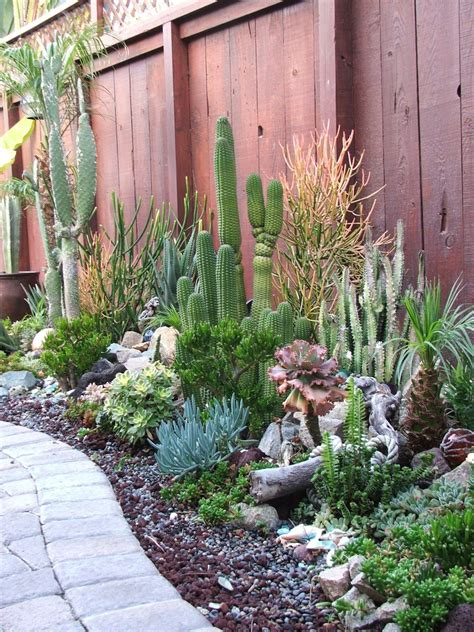 backyard cactus garden garden and bliss ocean theme landscaping gallery of photos