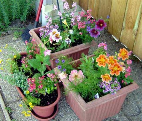 Pot Gardening Ideas Sun Container Garden Ideas Photograph Container Garde