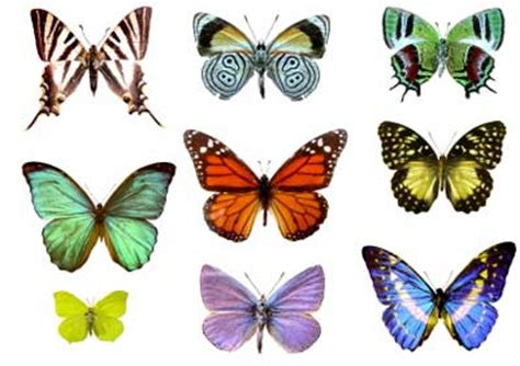 butterfly colors 20 most colourful butterflies pictures themescompany