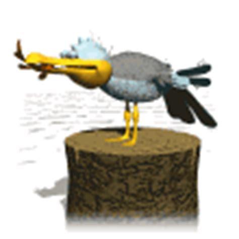imagenes animales carroñeros gifs animados de gaviotas
