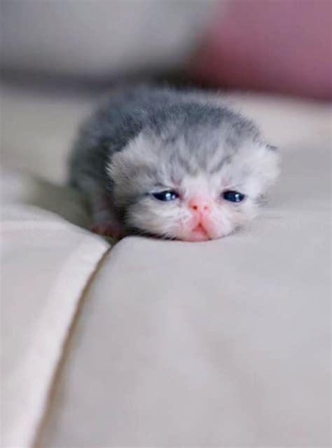 newborn kittens best 25 newborn kittens ideas on pinterest kittens