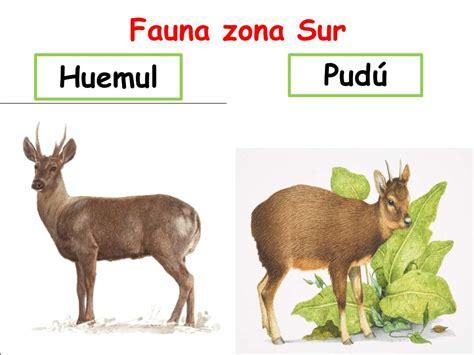 fotos animales zona sur de chile patrimonio natural fauna de chile ppt descargar