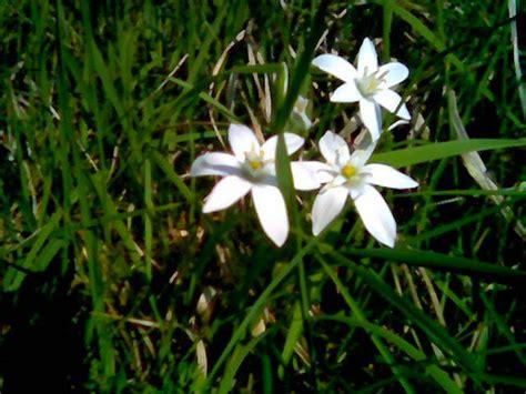 fiori di bach of bethlehem fiori di bach lutto un binomio possibile