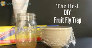 fruit flies trap the quot best quot fruit fly trap diy fruit fly trap