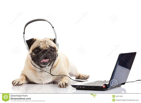 pug computer pug with headphone isolated on white background callcenter computer stock photo
